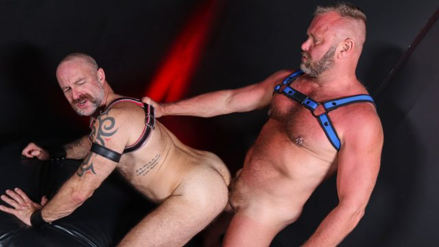 Pigs In The Playroom